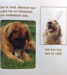 Alla hundar har ADHD bild
